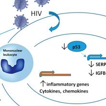 Artículo en Antiviral Research