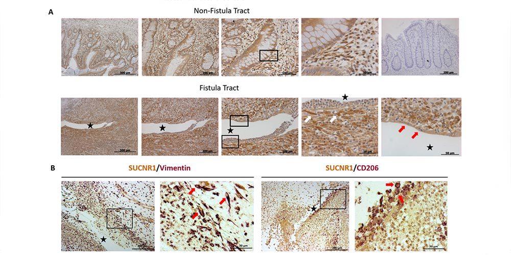 Artículo publicado en Cells