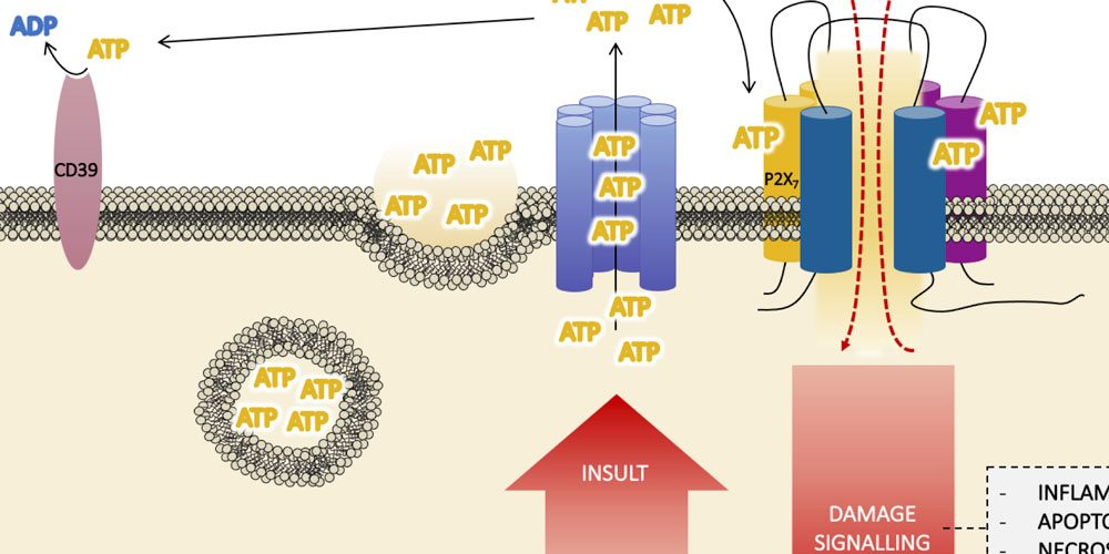 Review article in International Journal of Molecular Sciences